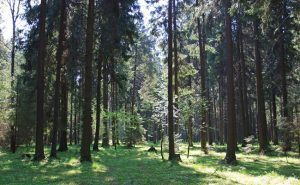 Losiny-Ostrov-National-Park-mosca